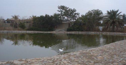 fallujah pond