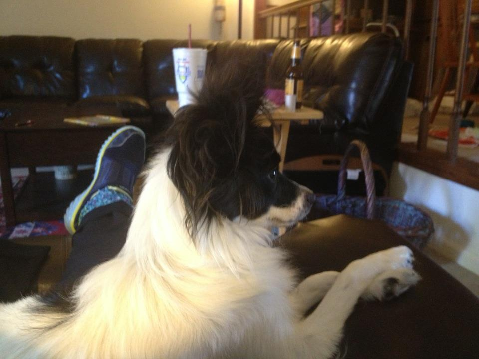 dogs   Padre Steve's World...Musings of a Progressive ...