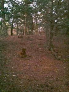 deerhunt