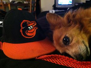 molly and orioles hat